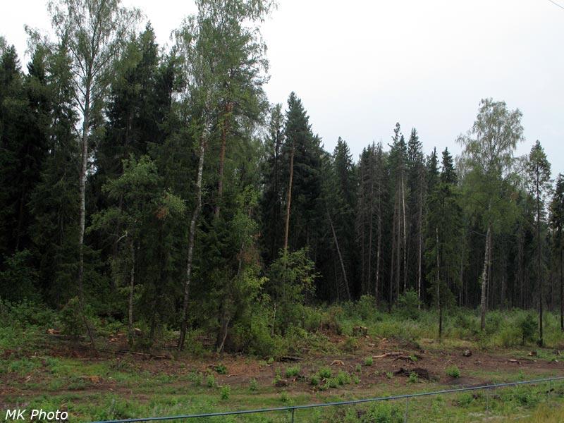 """Вырубка леса и """"Сапсановый"""" заборчик"""