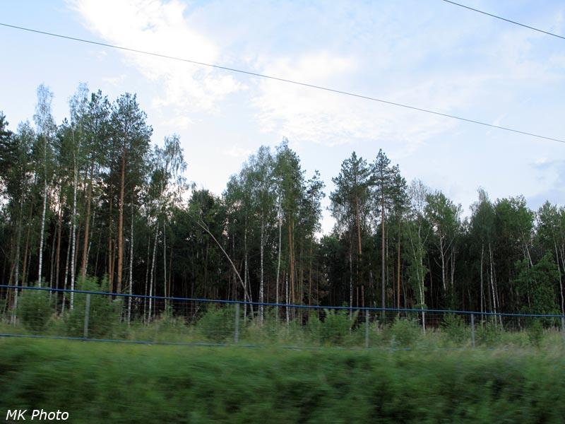 Смешанный лес вдоль дороги и заборчик для/от Сапсана